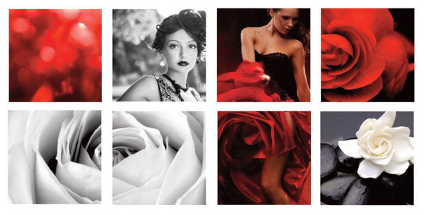 Picture of Scarlet Beauty Canvas